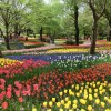 GWは昭和記念公園で盛大に咲き誇るフラワーフェスに行くよ!